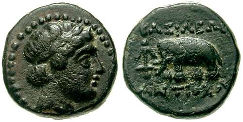 """Bronze séleucide pour Antiochos III """"à l'éléphant ... SC_0979"""